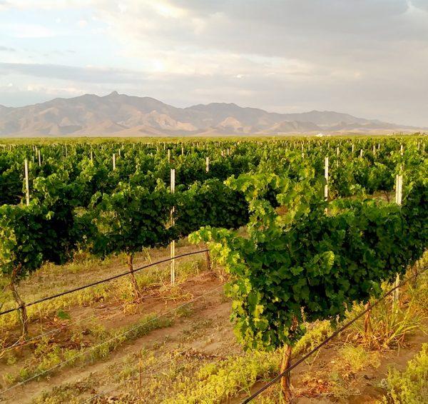 Robert Carlson of Carlson Creek vineyard