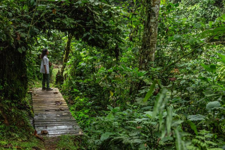 Sinamatella Uganda Bwindi forest path