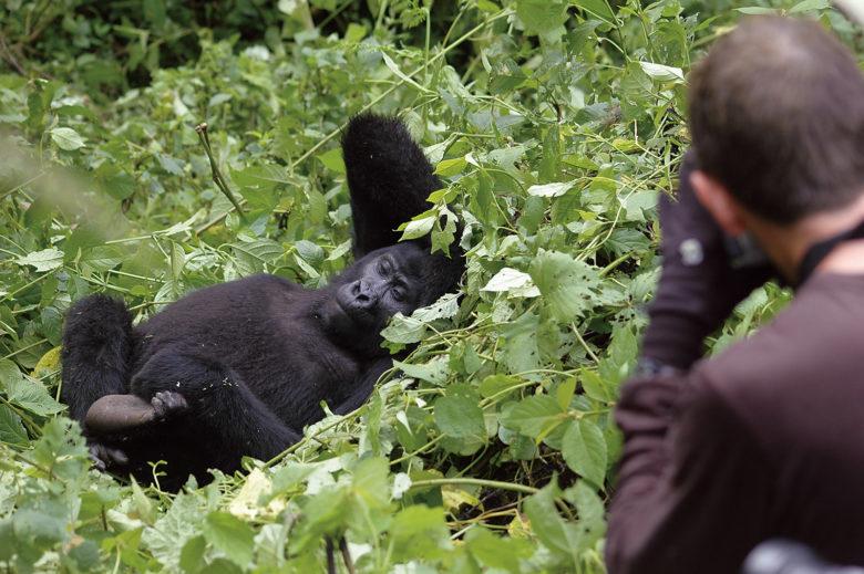Uganda Gorilla - Abercrombie & Kent