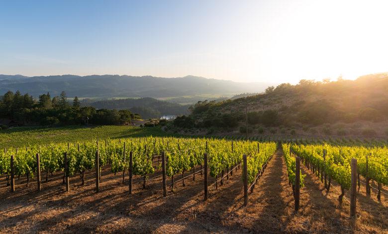 Vineyards for Viader Winery Napa Valley