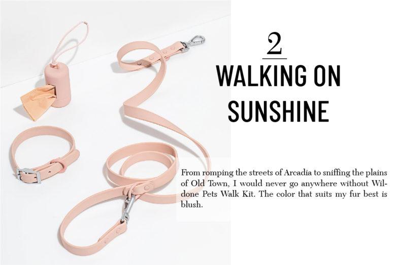 Wildone Best gift for pets Walk kit