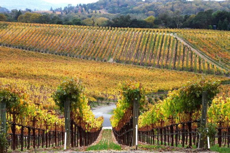 Palmaz Vineyards Napa California