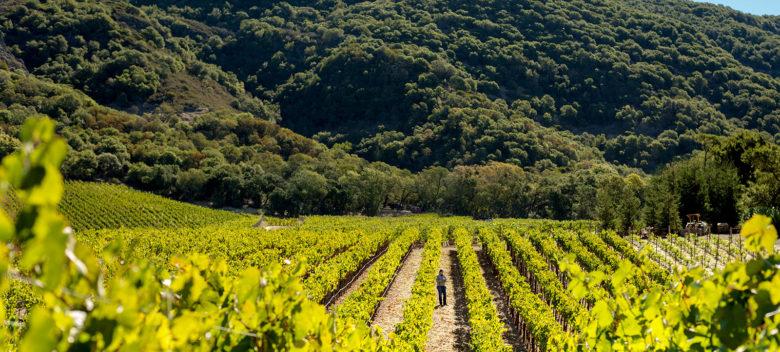 Palmaz Vineyards terroir Napa