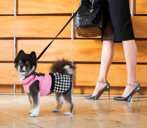 luxury hotel for pets Fairmont Princess AZ
