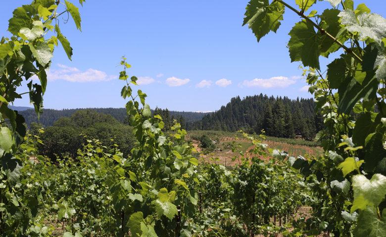 Arnot-Roberts natural wine El Dorado California