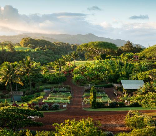 Kukui'ula Mauka agrihood and farm in Hawaii
