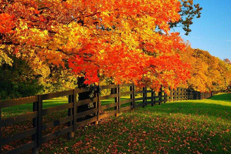 Fall foliage bike tours in update New York