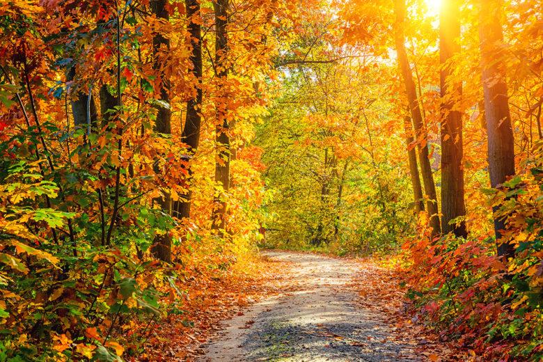 enjoy Fall foliage bike tours in Washington DC