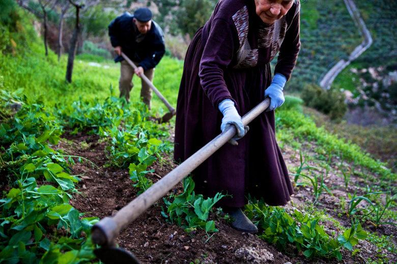 Sardinia farming in the blue zones