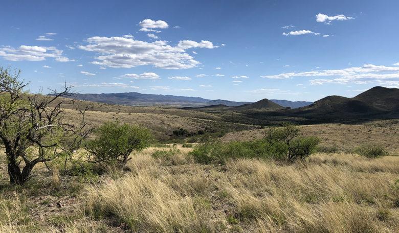 Tombstone AZ vineyard living